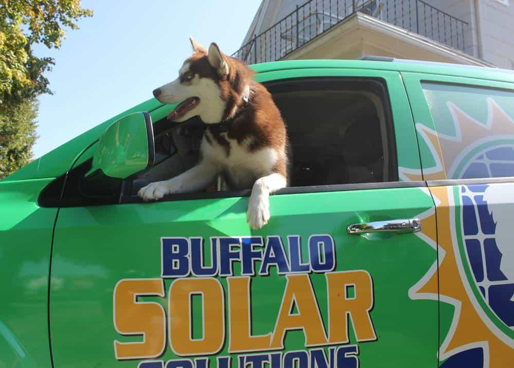 Solar the Husky - Buffalo Solar Solutions